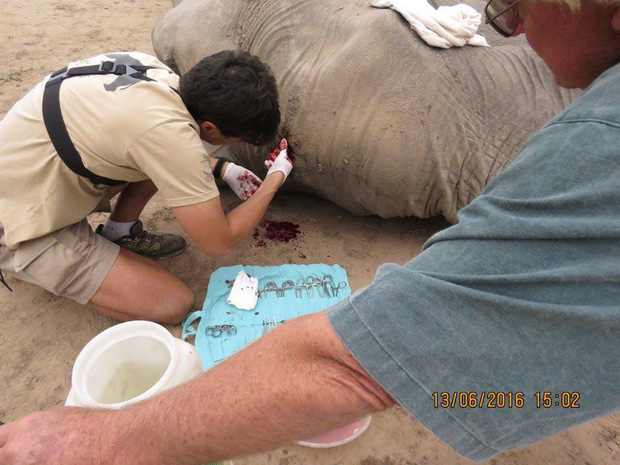 Kiểm tra lỗ thủng kỳ lạ trên đầu chú voi, bác sỹ thú y phát hiện sự thật đau buồn nhưng cũng bất ngờ vì cách hành xử của con vật - Ảnh 9.