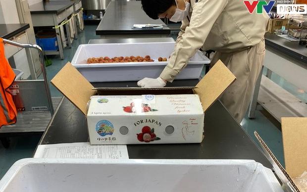 2 tấn vải thiều đầu tiên xuất khẩu sang Nhật bán hết chỉ trong 1 ngày - Ảnh 1.