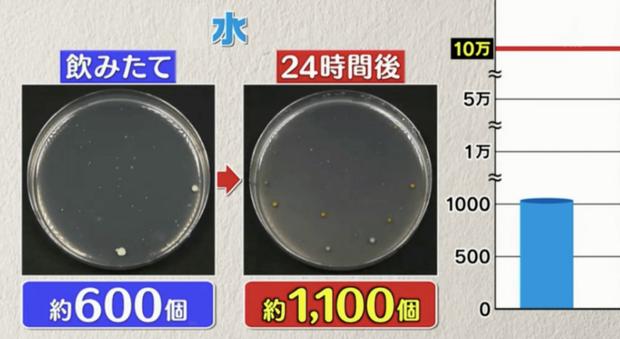 Đài TBS Nhật thử nghiệm 6 loại nước phổ biến sau 24 giờ ở nhiệt độ phòng: Vi khuẩn trong cà phê sữa tăng gấp 8000 lần, trong trà xanh không tăng còn giảm - Ảnh 8.