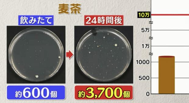 Đài TBS Nhật thử nghiệm 6 loại nước phổ biến sau 24 giờ ở nhiệt độ phòng: Vi khuẩn trong cà phê sữa tăng gấp 8000 lần, trong trà xanh không tăng còn giảm - Ảnh 7.