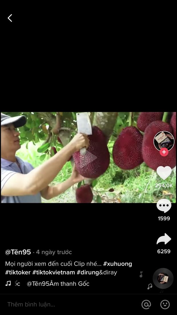 """Thực hư về quả mít vỏ đỏ """"độc nhất vô nhị"""" tại Việt Nam đang khiến cộng đồng mạng tranh cãi: Lẽ nào lại là chiêu trò """"câu view""""? - Ảnh 14."""