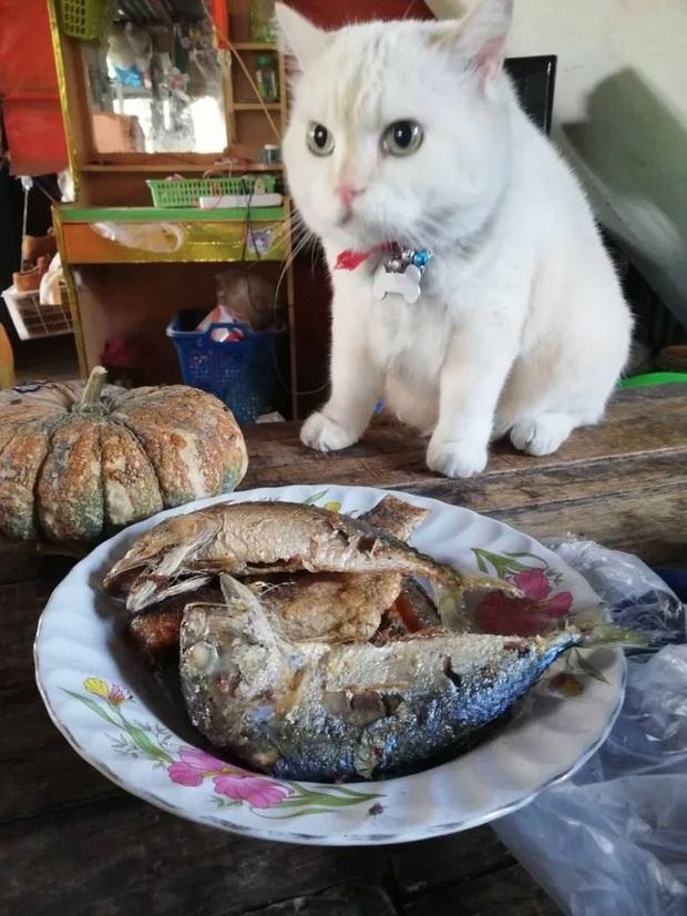 Ông mèo trông quầy dưa hấu bất ngờ nổi tiếng vì biểu cảm nhăn nhó khó chịu - Ảnh 13.