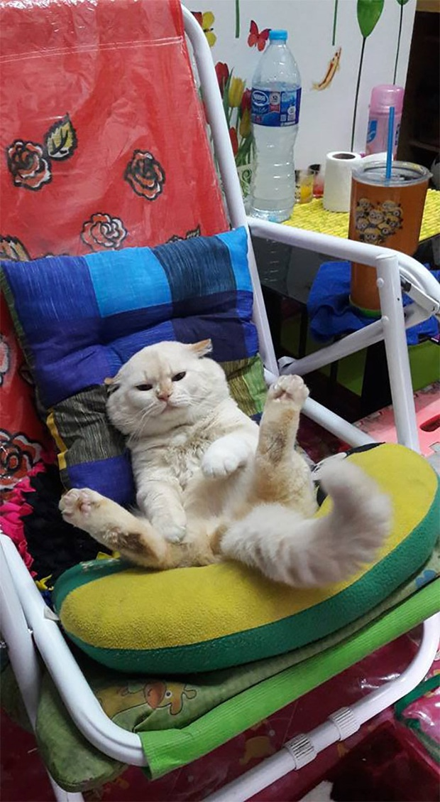 Ông mèo trông quầy dưa hấu bất ngờ nổi tiếng vì biểu cảm nhăn nhó khó chịu - Ảnh 9.
