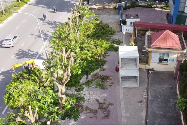 Hàng loạt cây xanh ở thành phố Vinh bị cắt trụi trong nắng nóng đỉnh điểm - Ảnh 2.