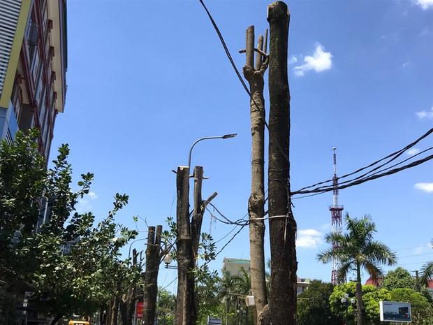 Hàng loạt cây xanh ở thành phố Vinh bị cắt trụi trong nắng nóng đỉnh điểm - Ảnh 12.