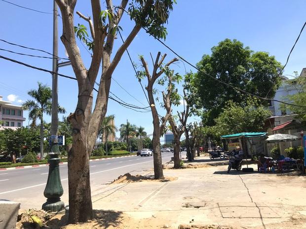 Hàng loạt cây xanh ở thành phố Vinh bị cắt trụi trong nắng nóng đỉnh điểm - Ảnh 7.