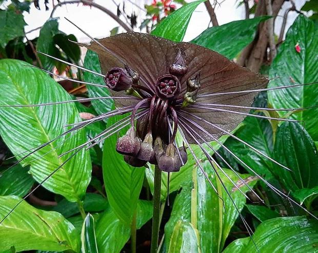 Những loài hoa hình thù kì dị khiến ai xem xong cũng không dám tin, một mực khăng khăng đây là sản phẩm của photoshop - Ảnh 4.