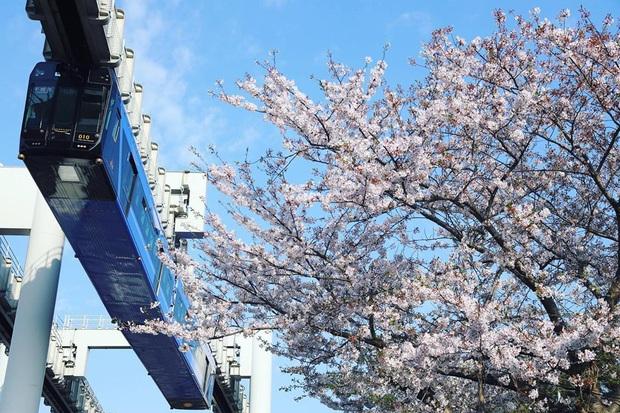 """Không hổ danh """"đất nước ngoài hành tinh"""" trong mắt du khách, Nhật Bản chính là nơi sở hữu đoàn tàu treo ngược dài nhất thế giới hiện nay - Ảnh 12."""