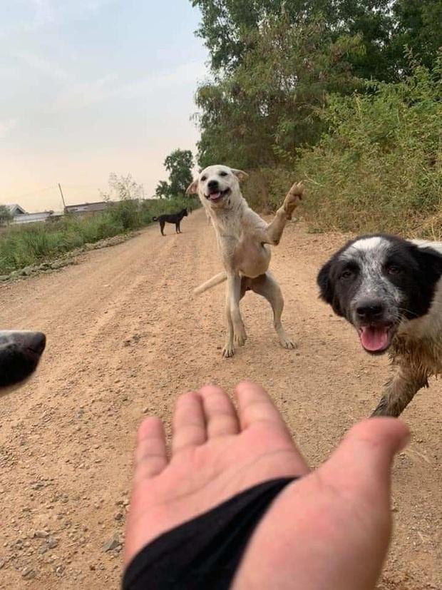 Loạt ảnh những chú chó hoang cười tít mắt vui mừng khi được người qua đường cho đồ ăn khiến ai nhìn cũng tan chảy - Ảnh 1.