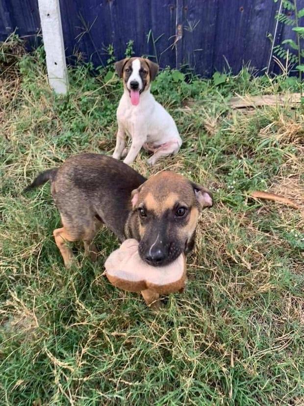 Loạt ảnh những chú chó hoang cười tít mắt vui mừng khi được người qua đường cho đồ ăn khiến ai nhìn cũng tan chảy - Ảnh 4.