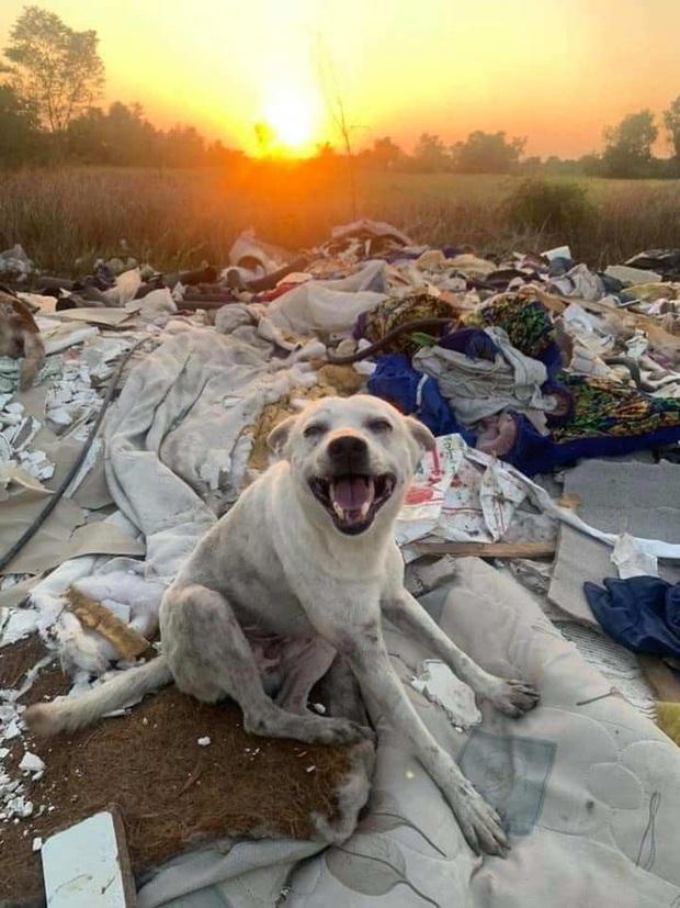 Loạt ảnh những chú chó hoang cười tít mắt vui mừng khi được người qua đường cho đồ ăn khiến ai nhìn cũng tan chảy - Ảnh 5.