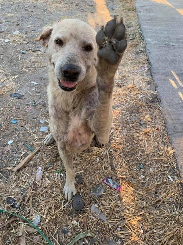 Loạt ảnh những chú chó hoang cười tít mắt vui mừng khi được người qua đường cho đồ ăn khiến ai nhìn cũng tan chảy - Ảnh 6.