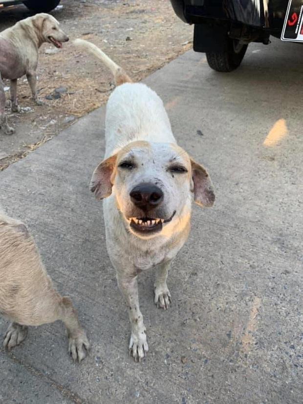 Loạt ảnh những chú chó hoang cười tít mắt vui mừng khi được người qua đường cho đồ ăn khiến ai nhìn cũng tan chảy - Ảnh 8.