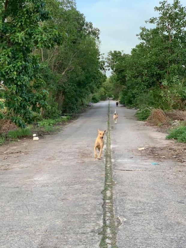 Loạt ảnh những chú chó hoang cười tít mắt vui mừng khi được người qua đường cho đồ ăn khiến ai nhìn cũng tan chảy - Ảnh 9.