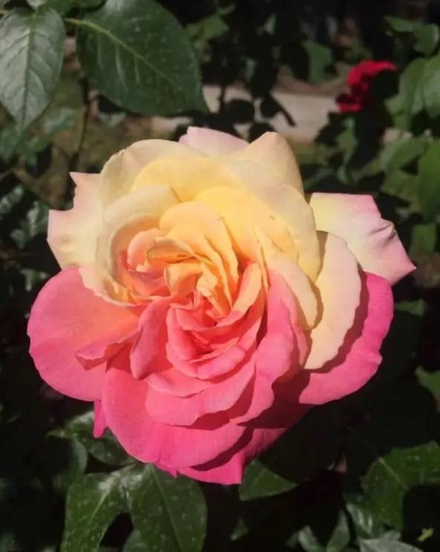 Những loài hoa hình thù kì dị khiến ai xem xong cũng không dám tin, một mực khăng khăng đây là sản phẩm của photoshop - Ảnh 7.