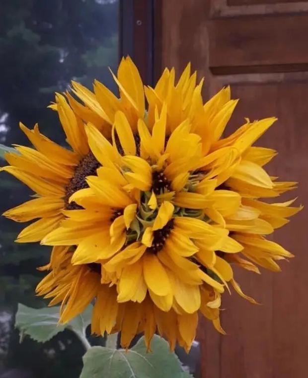 Những loài hoa hình thù kì dị khiến ai xem xong cũng không dám tin, một mực khăng khăng đây là sản phẩm của photoshop - Ảnh 10.