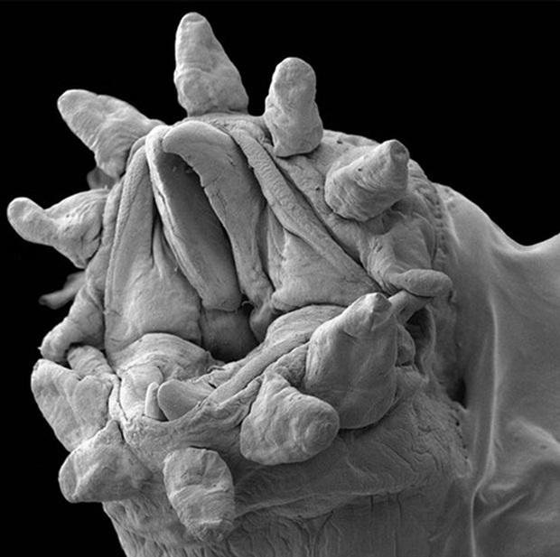 Chùm ảnh kinh dị khi nhìn qua kính hiển vi khiến người gan dạ nhất cũng phải rùng mình sởn gai ốc - Ảnh 6.