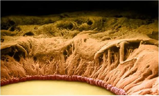 Chùm ảnh kinh dị khi nhìn qua kính hiển vi khiến người gan dạ nhất cũng phải rùng mình sởn gai ốc - Ảnh 4.