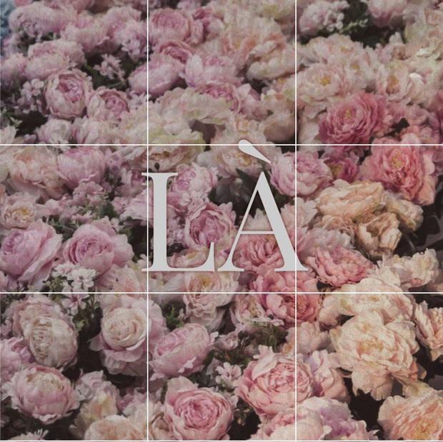 Miệt mài đăng 45 tấm ảnh hoa trong 5 ngày, cuối cùng Sơn Tùng M-TP cũng chốt tên ca khúc mới: Có Chắc Yêu Là Đây! - Ảnh 5.