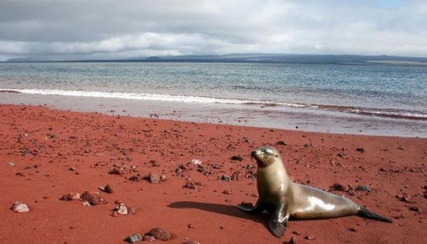 Không tin vào mắt mình trước 15 bãi biển độc nhất hành tinh, nơi nào cũng sở hữu vẻ đẹp ngỡ chỉ có trong trí tưởng tượng - Ảnh 27.