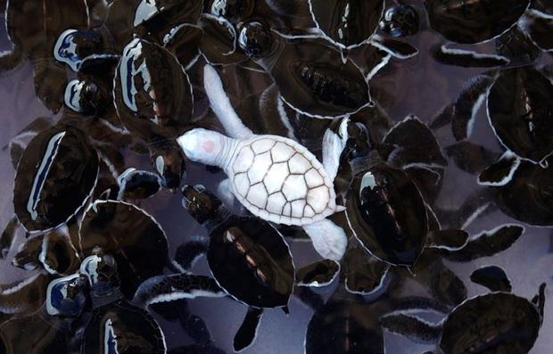 Chùm ảnh đẹp mê hồn về những chú động vật bị bệnh bạch tạng - Ảnh 1.