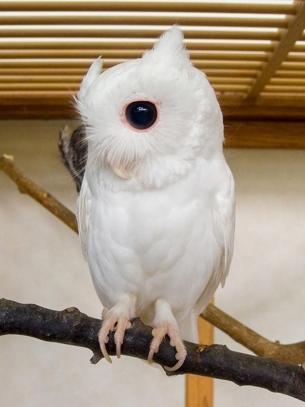 Chùm ảnh đẹp mê hồn về những chú động vật bị bệnh bạch tạng - Ảnh 8.