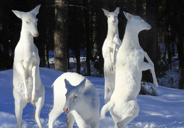 Chùm ảnh đẹp mê hồn về những chú động vật bị bệnh bạch tạng - Ảnh 10.