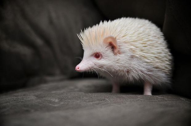 Chùm ảnh đẹp mê hồn về những chú động vật bị bệnh bạch tạng - Ảnh 11.