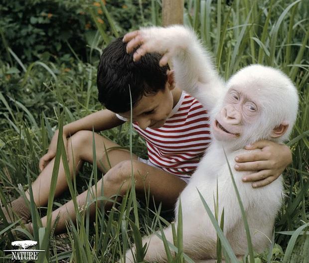 Chùm ảnh đẹp mê hồn về những chú động vật bị bệnh bạch tạng - Ảnh 12.