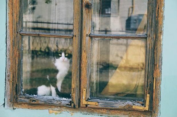 Chú chó đều đặn 3 lần một ngày nhìn ra cửa sổ suốt 6 tháng liền bỗng dừng hẳn rồi sinh trầm cảm, chủ tìm hiểu mới biết lý do tại sao - Ảnh 2.