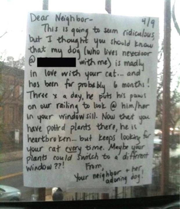 Chú chó đều đặn 3 lần một ngày nhìn ra cửa sổ suốt 6 tháng liền bỗng dừng hẳn rồi sinh trầm cảm, chủ tìm hiểu mới biết lý do tại sao - Ảnh 3.