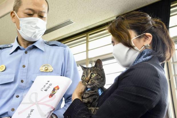 Phát hiện mèo hàng xóm có những hành động lạ lùng, người phụ nữ đi theo xem thử rồi may mắn cứu được một mạng người - Ảnh 1.