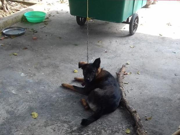 Hy hữu: Chú chó bị 2 gia đình tranh chấp quyền nuôi dưỡng, tăng cân vù vù khi bị tạm giữ tại trụ sở công an - Ảnh 1.