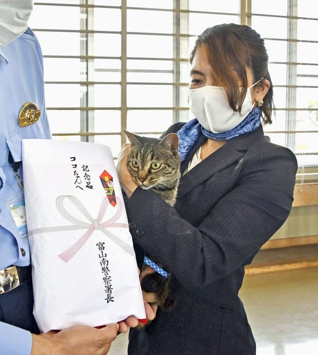 Phát hiện mèo hàng xóm có những hành động lạ lùng, người phụ nữ đi theo xem thử rồi may mắn cứu được một mạng người - Ảnh 2.