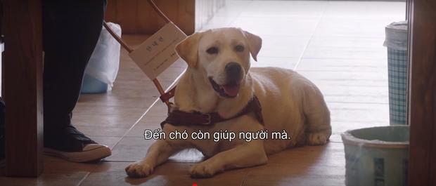 Mystic Pop-up Bar tập 5 siêu hot nhờ màn khẩu nghiệp của crush Sung Jae: Đến chó còn giúp người mà, hành động giống người chút đi! - Ảnh 6.