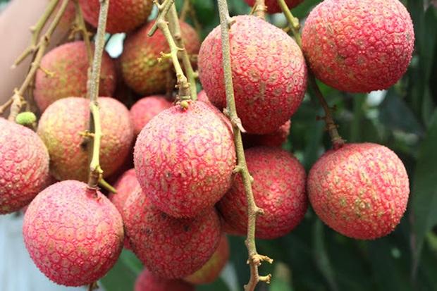 """7 loại quả là """"đặc sản"""" của mùa hè và những lưu ý cực quan trọng khi ăn - Ảnh 4."""