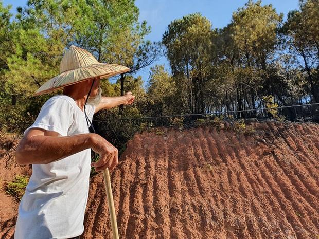 Cảnh hoang tàn ở cánh rừng thông già sau nhiều đợt cháy hoành hành những ngày qua - Ảnh 14.