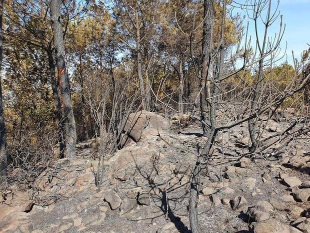 Cảnh hoang tàn ở cánh rừng thông già sau nhiều đợt cháy hoành hành những ngày qua - Ảnh 16.