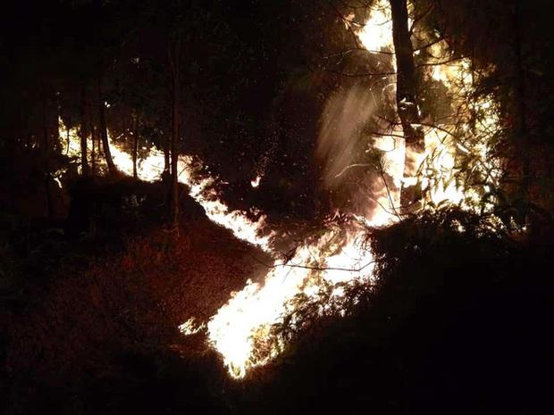 Cảnh hoang tàn ở cánh rừng thông già sau nhiều đợt cháy hoành hành những ngày qua - Ảnh 9.
