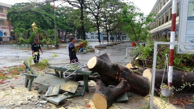 Cây phượng bật gốc ngã trúng 3 học sinh ở trường THCS dẫn tới bị thương ở Đồng Nai - Ảnh 1.