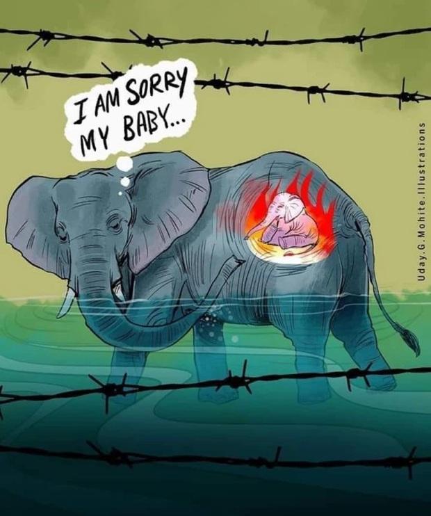 Xót thương voi mẹ mang thai chết vì ăn phải dứa nhét thuốc nổ, cộng đồng mạng chia sẻ những bức vẽ tưởng niệm đầy cảm xúc - Ảnh 6.