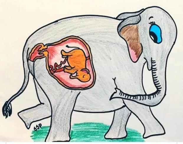 Xót thương voi mẹ mang thai chết vì ăn phải dứa nhét thuốc nổ, cộng đồng mạng chia sẻ những bức vẽ tưởng niệm đầy cảm xúc - Ảnh 14.
