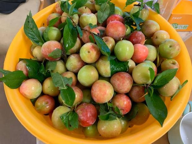 Giá mận Nhật lên tới 213k/kg nhưng người Việt ở Nhật vẫn cắn răng mua ăn cho đỡ nhớ món quả đặc sản quê nhà - Ảnh 4.