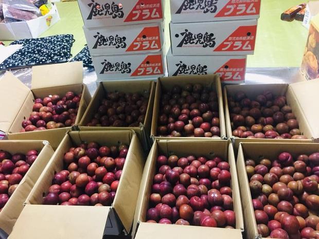 Giá mận Nhật lên tới 213k/kg nhưng người Việt ở Nhật vẫn cắn răng mua ăn cho đỡ nhớ món quả đặc sản quê nhà - Ảnh 5.
