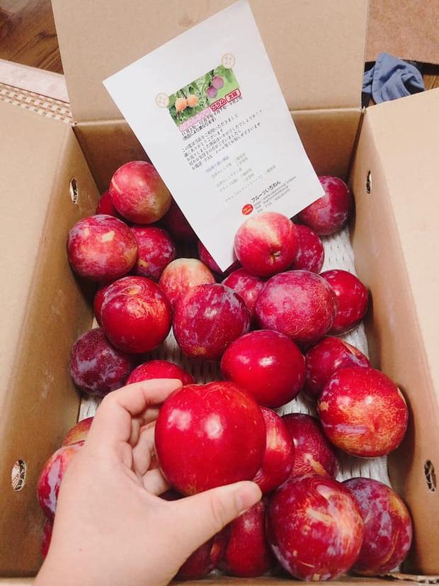 Giá mận Nhật lên tới 213k/kg nhưng người Việt ở Nhật vẫn cắn răng mua ăn cho đỡ nhớ món quả đặc sản quê nhà - Ảnh 2.