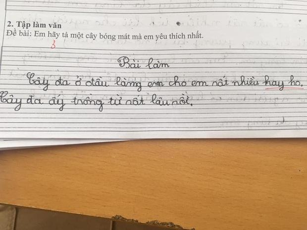Chết cười với loạt văn tả cây của học sinh lớp 1, đến cô giáo cũng không ngờ trò lầy đến thế - Ảnh 3.