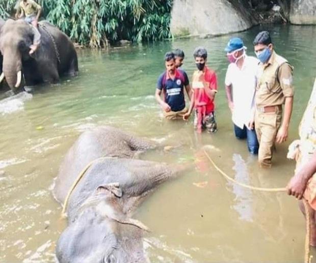 Đã bắt giữ được nghi phạm trong vụ voi mẹ mang thai chết tức tưởi vì ăn phải dứa nhồi pháo nổ - Ảnh 1.