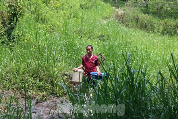 Hạn hán nghiêm trọng, học trò biên giới tan trường lại lặn lội vào rừng tìm nước - Ảnh 7.