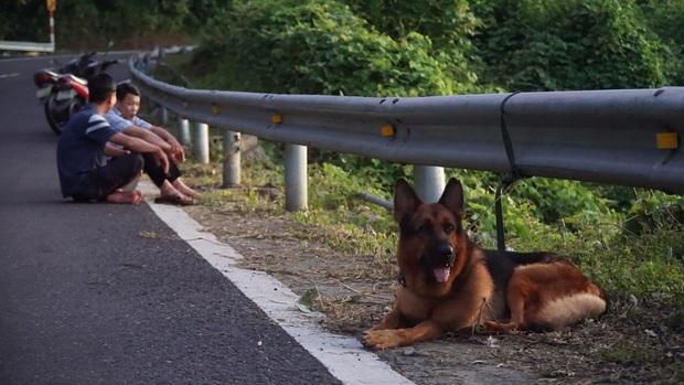 Thông tin chó nghiệp vụ hy sinh khi truy tìm tội phạm nguy hiểm vượt ngục là không chính xác - Ảnh 10.