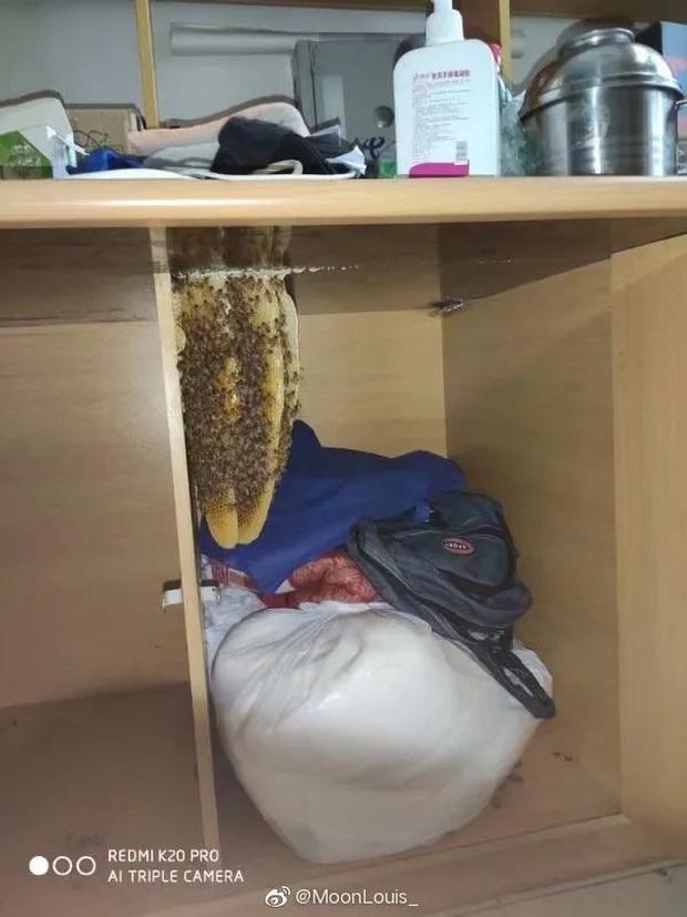 Trở lại trường sau mùa dịch, sinh viên tá hoả phát hiện ký túc xá biến thành rừng rậm, bồn cầu mọc cây và chuột làm tổ đầy trên chăn - Ảnh 15.